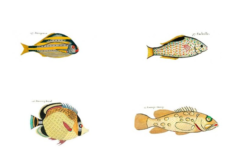 Louis Renard Yellow rainbow fish pictures