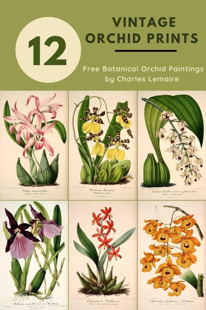 12 vintage orchid botantical prints