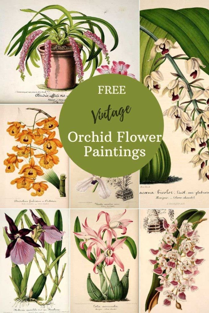 Free vintage orchid prints