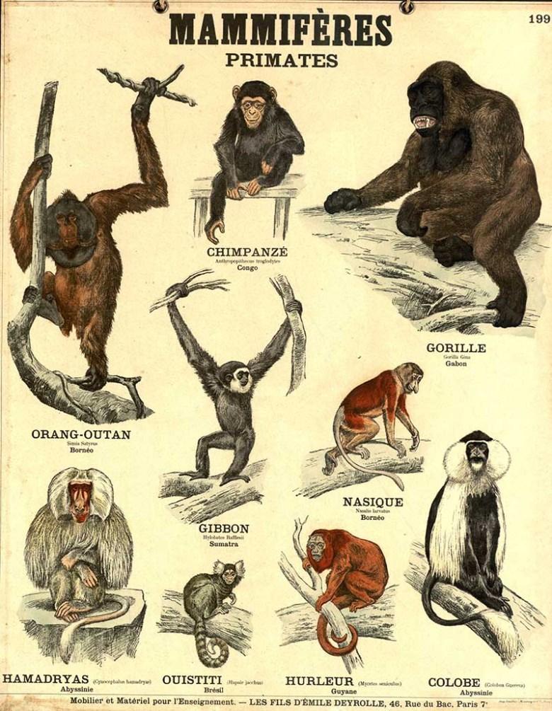 primates school poster