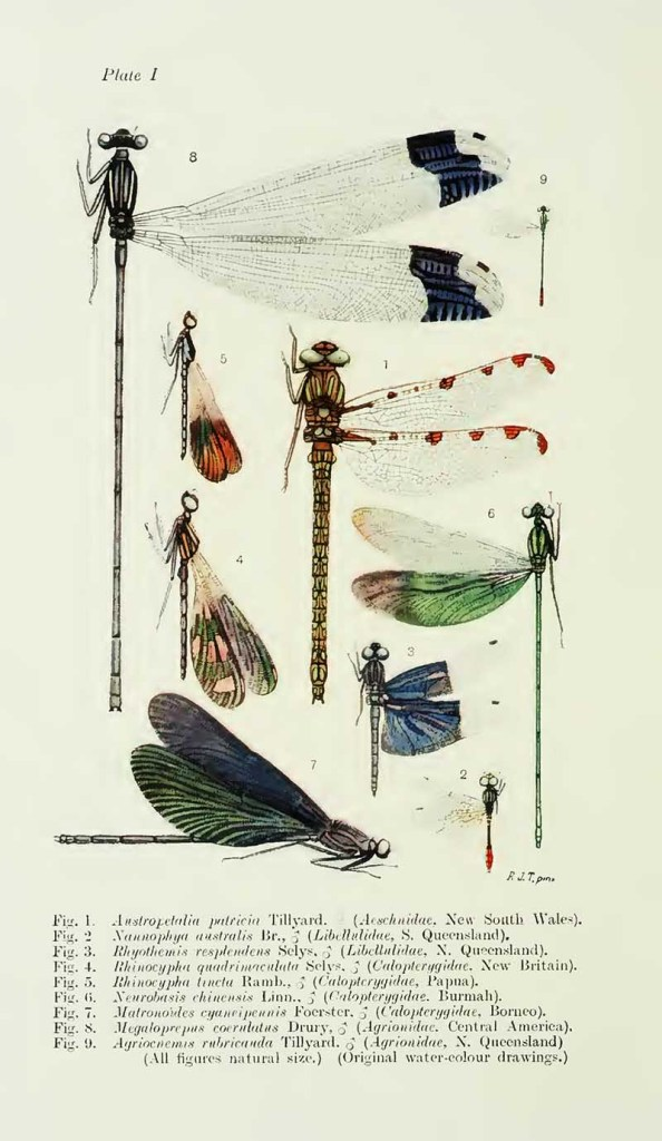 Biology of dragonflies