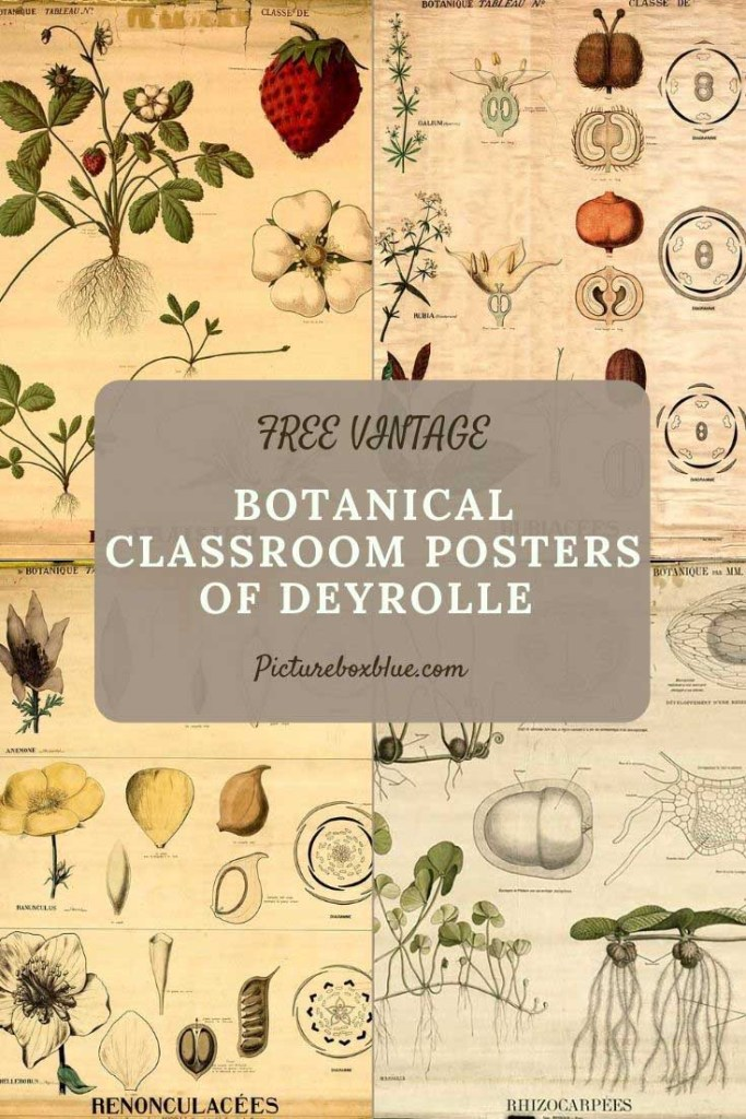 botanical_classroom_deyrolle_posters
