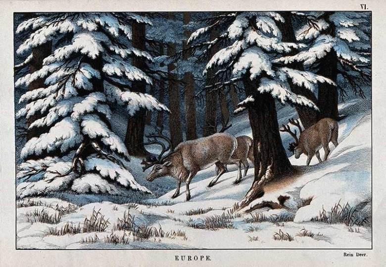 vintage reindeer drawings
