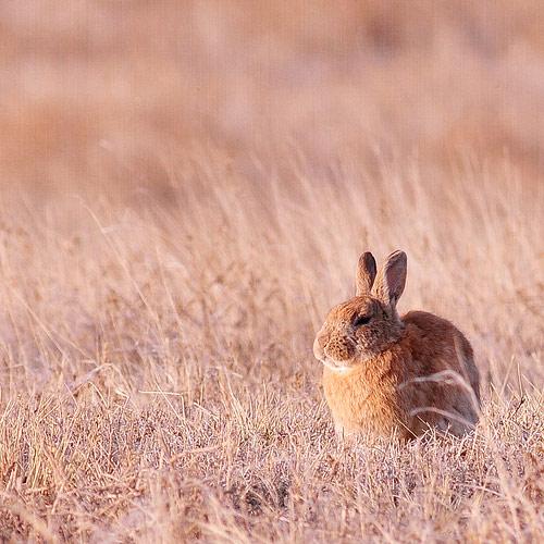 backyard rabbit photo
