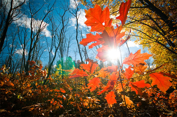 tips for photos during fall