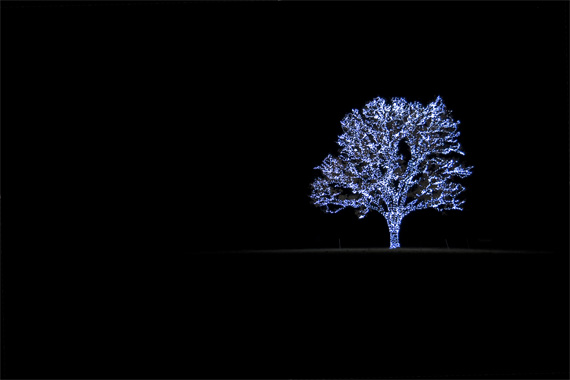holiday light photography