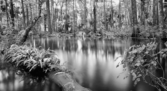Florida swamp photography