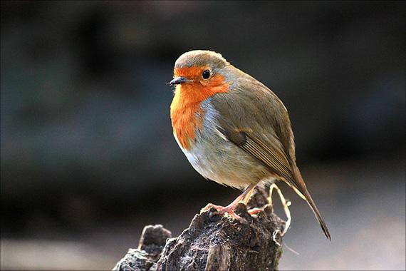 eye level bird photography
