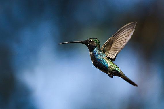 take better hummingbird shots