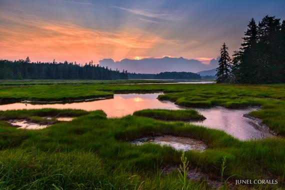 wetland landscape at sunset