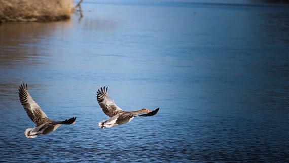 birdwatching photos