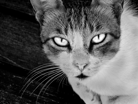 black and white photography 101