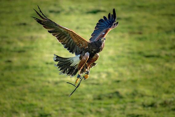 fast shutter speed bird in flight