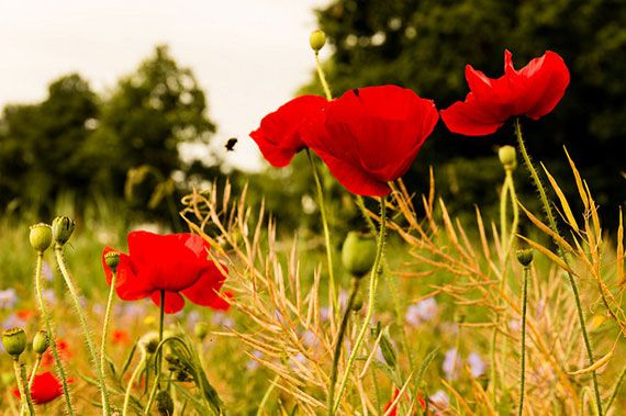 best flower photography tips