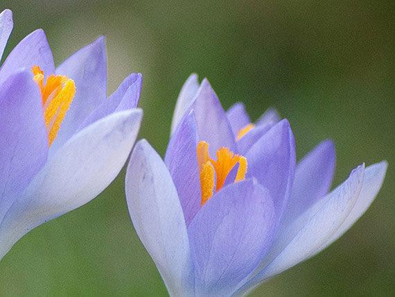 tips for better flower photography