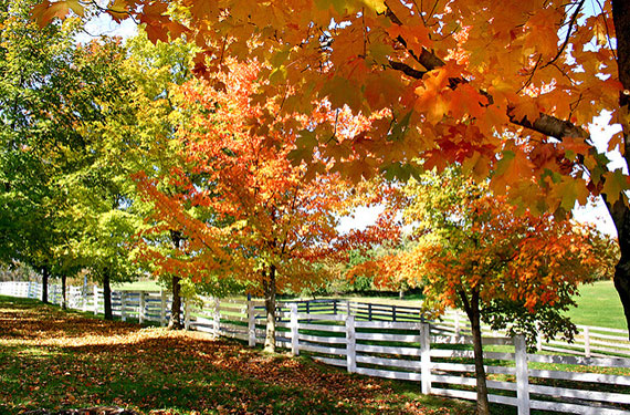 autumn photo tips