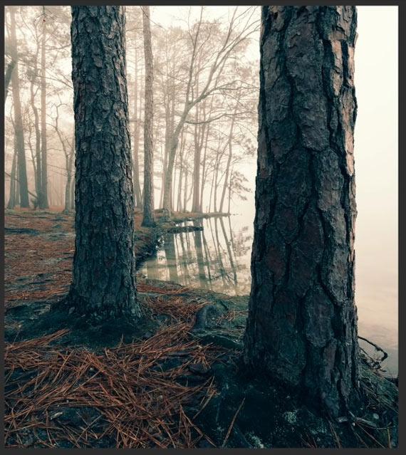 misty wood after split toning