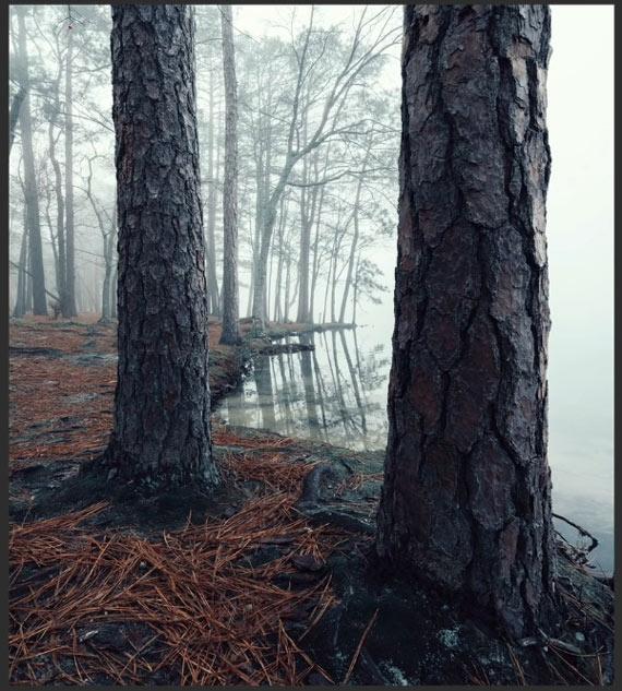 misty wood before split toning