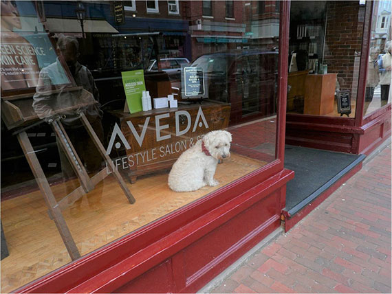 dog in shop window