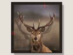Deer by Julian Hindson Box Framed Artcard