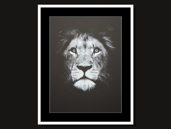 Beautiful Lion Framed