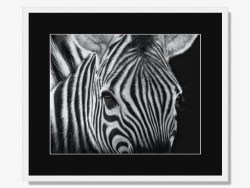 Are Zebras Stripes Black or White Framed Print By Karen Rankin Neal