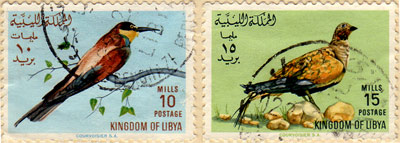 birds from libya