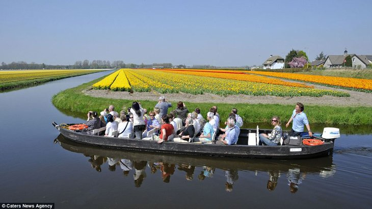 World Largest Flower Garden - Netherlands (15)
