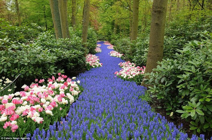World Largest Flower Garden - Netherlands (17)