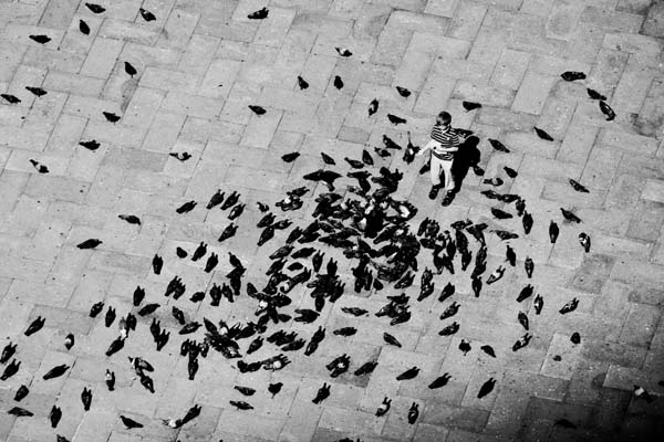Pigeons on St Marks