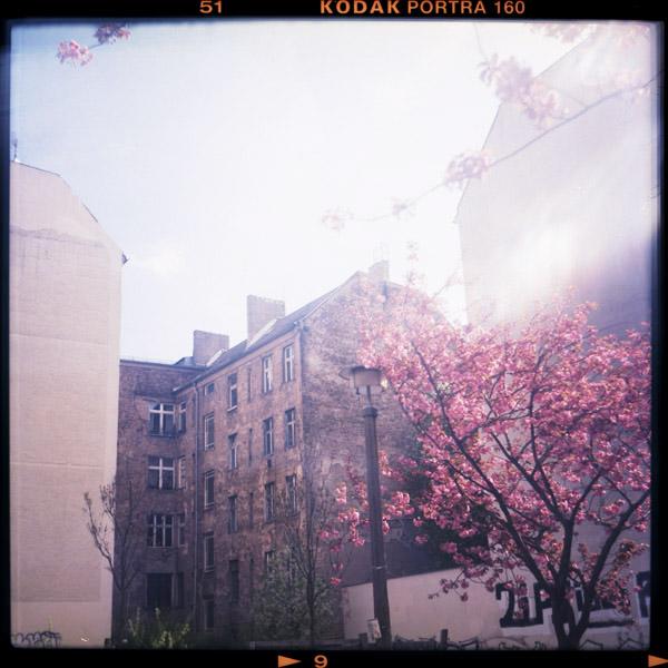 prenzlauer berg, kitsch, kirschblüten, c-print, bilder, berlin - Pieces of Berlin - Collection - Blog