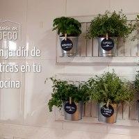 mini jardín de aromáticas en la cocina