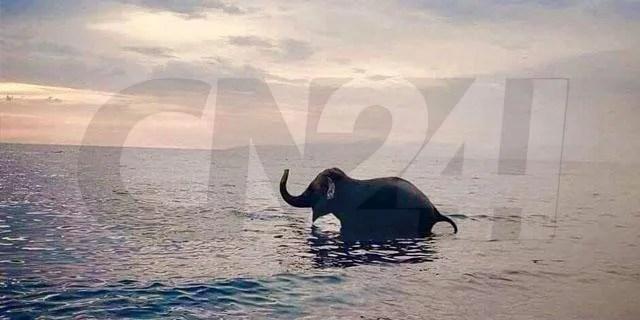 elefante circo mare
