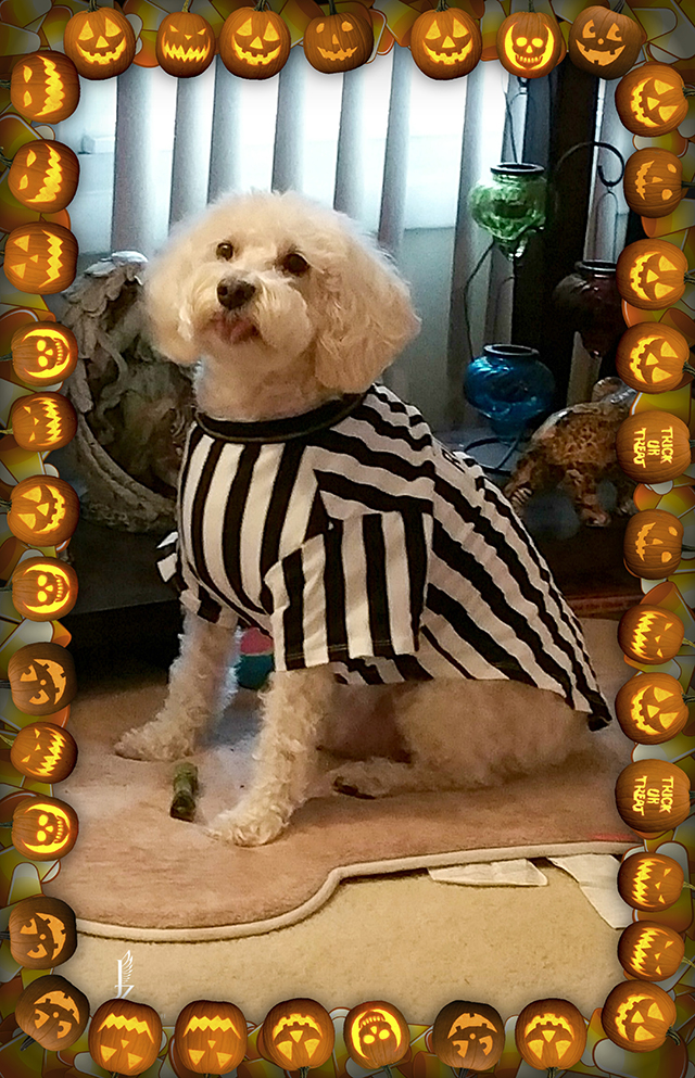 While we receive compensation when you click links to partners, they do not i. Jasper Zurich Halloween 2014 | Pierce Schnoodles