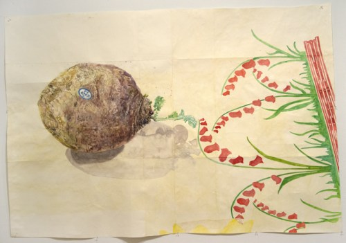 """Dawn Clements - """"Rutabaga,"""" 2015, Watercolor on paper, 48 x 70 inches"""