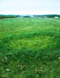 Detail: Fairy Ring with English Daisies
