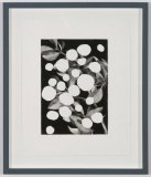 Plants with Holes - 2011, graphite on paper, 12 x 9.75 inches