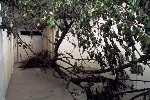 Dead Tree - no description