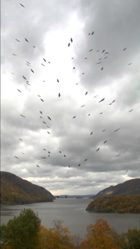 """John Stoney - """"Four Your Love, Battery at West Point,"""" (Video Still), 2009, HD Video, 5 Minutes continuous loop, 16:9 Aspect ratio, Ed. of 8 + 1 AP A view of the Hudson River from West Point Military Academy, with vultures"""