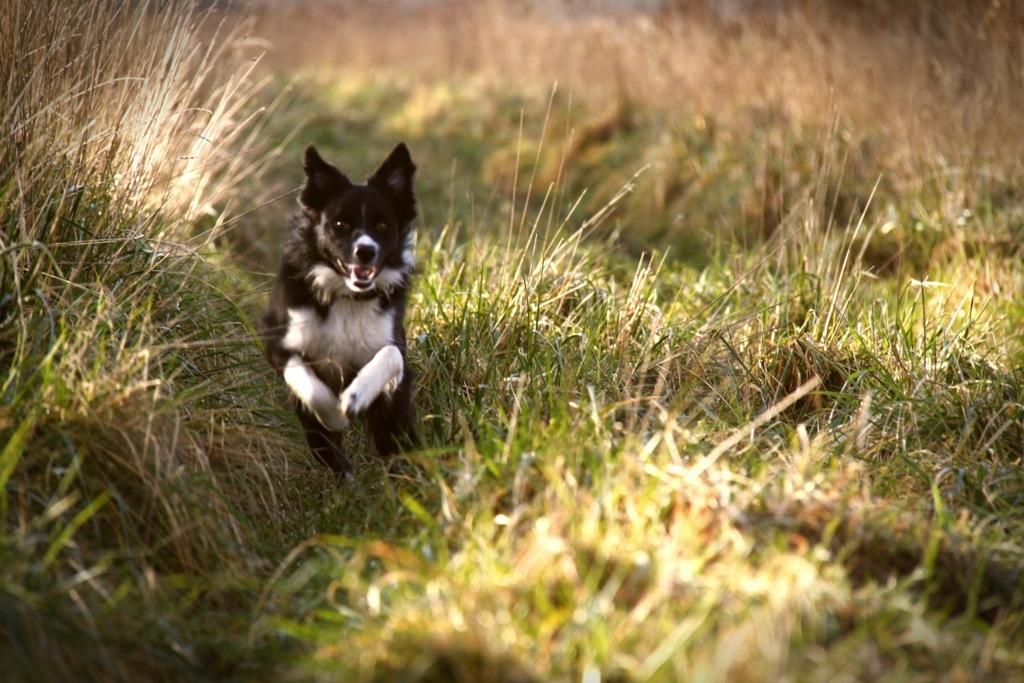 Fenna on the run