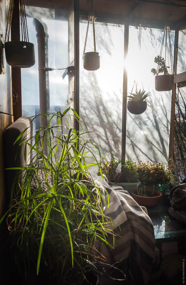 Stefanie Pietschmann - Time-out - Lockdown - Bremen - sunset window - house plants