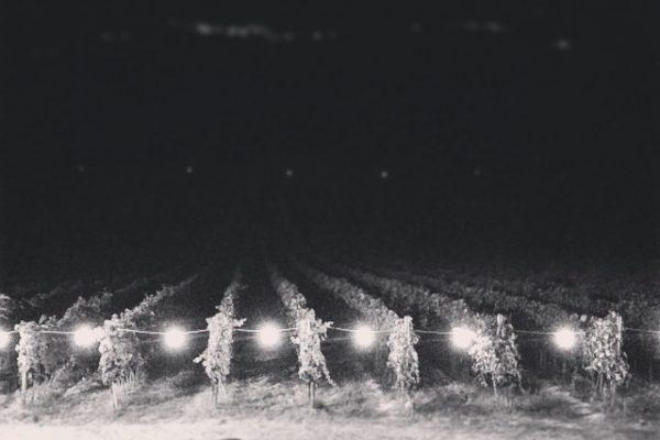 La notte è scesa si questa seconda edizione della Cena in Vigna. Grazie a tutti quelli che sono tornati a dividere con noi l'emozione di una nuova vendemmia e a tutti quelli che hanno trovato la via della vigna per la prima volta. Un grazie speciale va s tutto lo staff di Don Beta, che ha reso perfetto ogni dettaglio. Ci vediamo il prossimo anno!!!! #pievedepitti #cenainvigna  #vendemmia2014