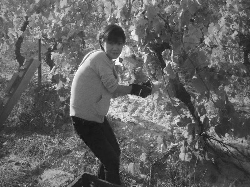 grapeharvest10