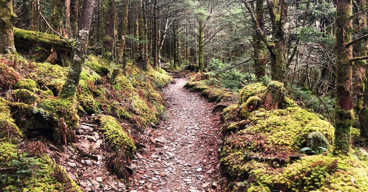 #5 zion lodge or #6 grotto pets: Trillium Gap Trail Grotto Falls Mt Leconte Smoky Mountain Hikes Pigeonforge Com