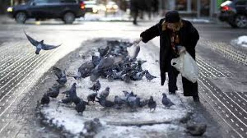 Pigeons being fed an individual leaving behind a mess of food scraps and droppings.