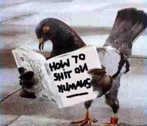 pigeon poop problems