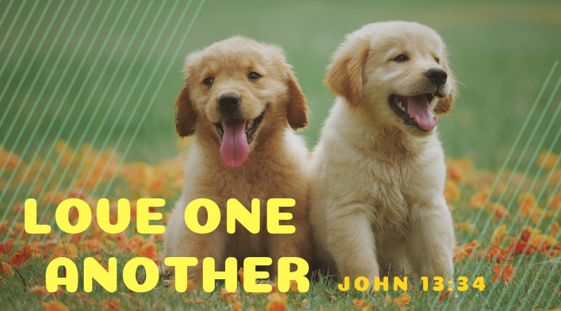 Photo of 2 puppies with message love one another