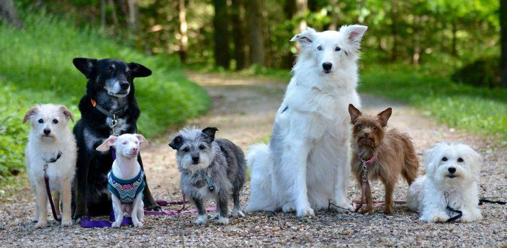 piglet the dog family