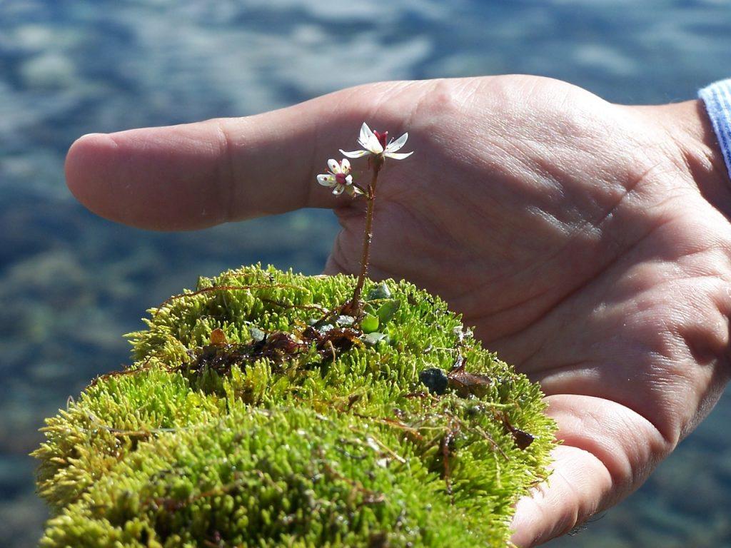 Kerää askartelutarvikkeet luonnosta