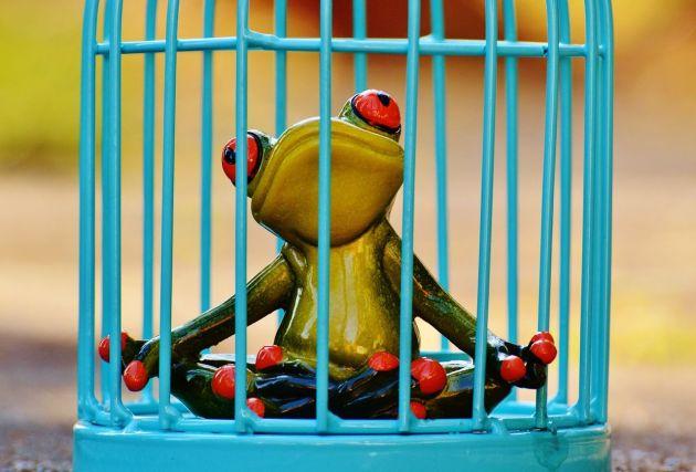 frog-1247177_1280